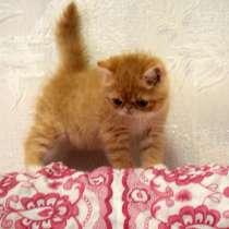 Экзот - кот, в г.Днепропетровск