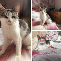 Кошка Булочка, в Краснодаре