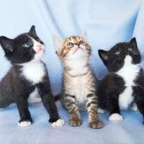 Котята в добрые руки, в Рязани