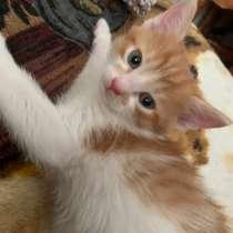 Котёнок в дар, в добрые руки)), в Набережных Челнах