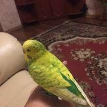 Приму в дар попугая, в Калининграде