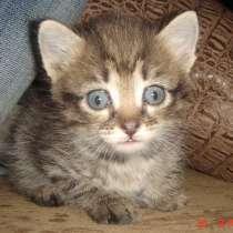Отдам даром в добрые руки котёнка девочка, в Омске