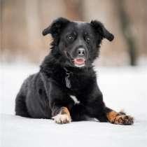 Красивый пёс Крис в добрые руки, в Москве