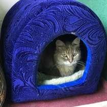 Кошечка ищет дом!, в Москве