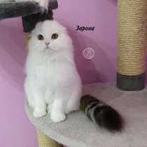 Зарина от питомника кошек, в г.Алматы
