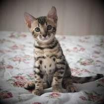 Продаются котята бенгальской породы, в Ростове-на-Дону