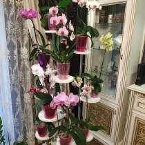 Полки для цветов, в г.Дружковка