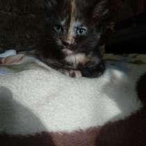 Раздаём маленьких, ласковых, пушистых и игривых котят!!!, в г.Лиепая