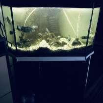 Продаю аквариум 115 лит, в Москве