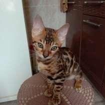 Бенгальские котята из питомника продаются, в Оренбурге