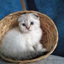 Котик голубоглазый, в Казани