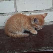 Котята в добрые руки, в г.Брест