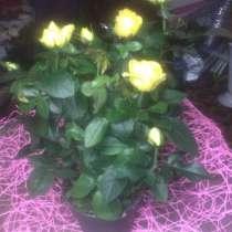 Продажа любых цветов, в Златоусте