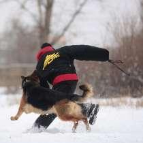 Дрессировка собак САРАТОВ ЭНГЕЛЬС, в Энгельсе