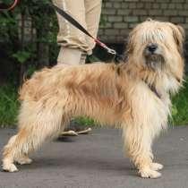 Длинношерстный красавец-пёс ищет дом, в Санкт-Петербурге