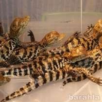 Рептилии Хабаровск, в Хабаровске