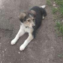 Очаровательный щенок, в Чехове