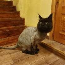 Стрижка кошек с выездом на дом, в Казани