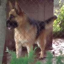 Пропала собака, в г.Барановичи