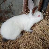 Продаю крольчат, в Нижневартовске
