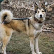 Великолепный молодой пёс, в Санкт-Петербурге