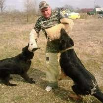 Дрессировка собак, в Белореченске