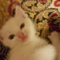 Отдам котенка в добрые руки, в г.Донецк