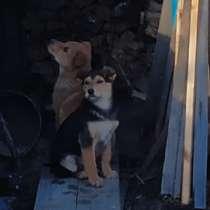 Отдадим щенков, в Челябинске