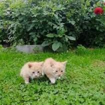 Котенок в добрые руки, даром, в Орехово-Зуево