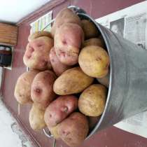 Экологически чистый картофель, в Томске