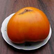 Семена коллекционных сортов помидор, перцев и баклажан, в г.Винница