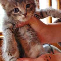 Супер котята, в Звенигороде