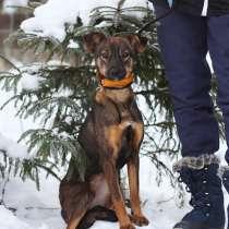 Собачка совсем небольшого размера, в Санкт-Петербурге