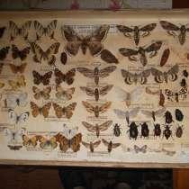 Бабочки и жучки)), в г.Николаев