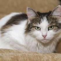 Муся. Просто кошка, которой нужен дом, в Калуге