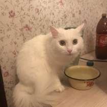 Кошка Снежка, в Москве