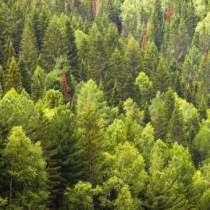 Услуги в сфере лесного хозяйства, в Екатеринбурге