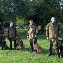 Дрессировка собак в Москве и Московской области, в Москве