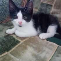 Котик 2 месяца, в г.Борисов