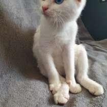 Котёнок с разными глазами, в Кашире