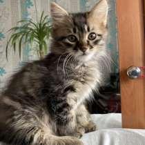 Природні, виховані, дуже гарні кошенята, в г.Одесса