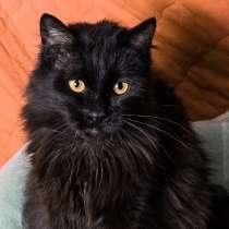 Черный кот Сэмуель–метис мейн-куна в добрые руки, в Москве