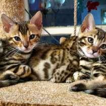 Бенгальские котята - официальный питомник, в г.Мариуполь