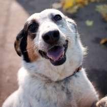 Ваше Счастье - в Наших Руках ! (собаки от МБфондаЗЖ), в г.Кокшетау
