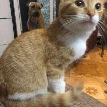 Котёнок, в Новочеркасске