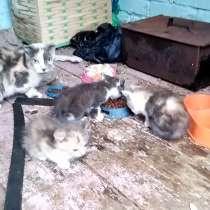 В добрые руки кошка и котята, в Волгодонске