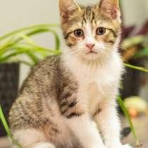 Котята полосатики-близняшки ищут дом, в Москве