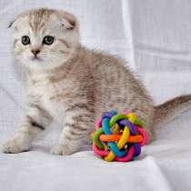 Породистые котята, в Калуге