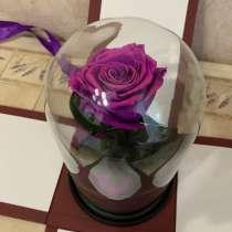 Роза из фильма Красавица и Чудовище, в Раменское