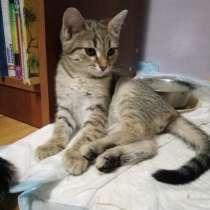 Котята в добрые руки, в Зеленограде